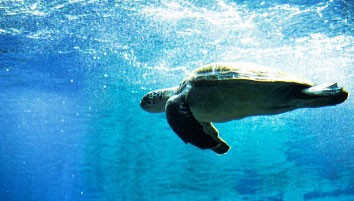 afrykarium-zolw-morski